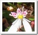 お花のアルバム2