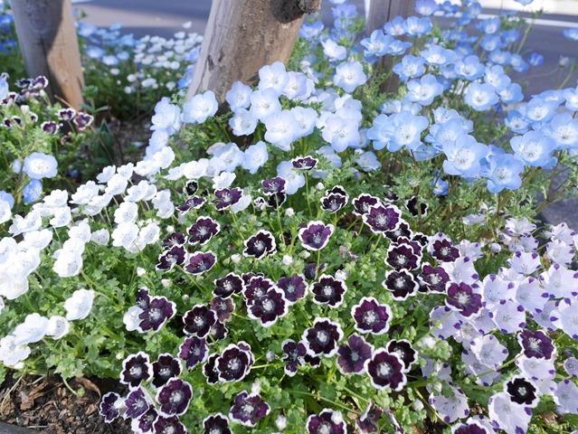 街路樹下の花